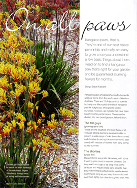 Article on Kangaroo Paws