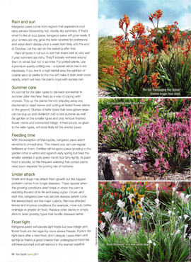Second page of the kangaroo paws article